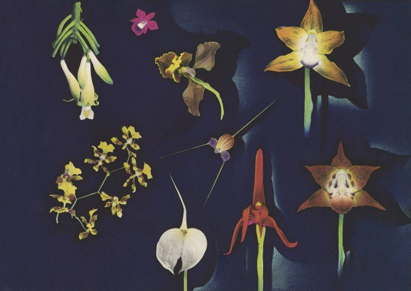 Luis F. Osorio, Colombian Orchids, 1941
