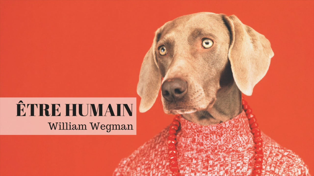 Exposition William Wegman <br> en visite immersive 3D